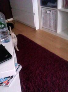 Lucy erkundet wieder die Wohnung